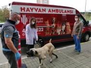 Oyuncu Hasan Kaçan'ın Bulduğu Hasta Köpek Tedavi Edildi