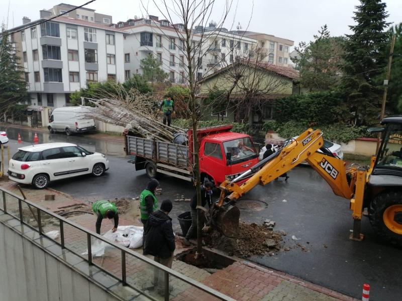 Ümraniye'de Cadde ve Sokaklar Yeşile Bürünecek