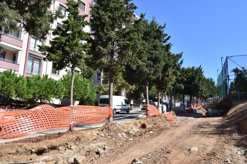 Yol Genişletilirken Ağaçlara Dokunulmuyor