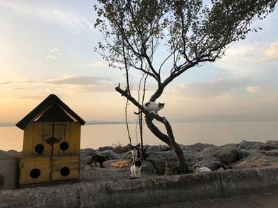 Denize Sıfır Tripleks Villalar, Tek Şart Tuzla'da Yaşamak