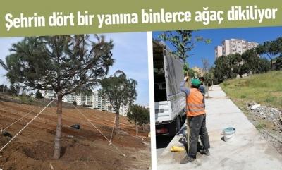 Kentin dört bir yanına binlerce ağaç dikiliyor